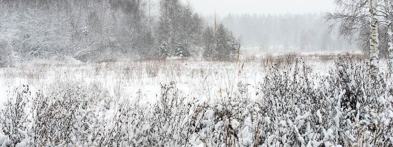 Vinterlandskap och Lappugglan kan vara där nånstans!